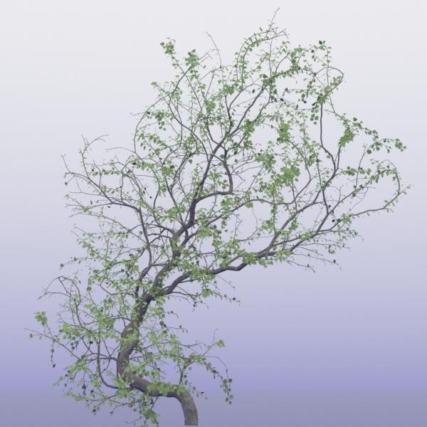 sittingtree