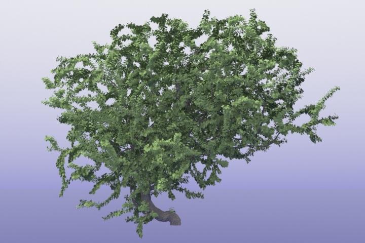 sittingtree2