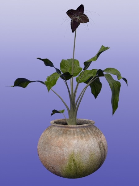 bat plant-1